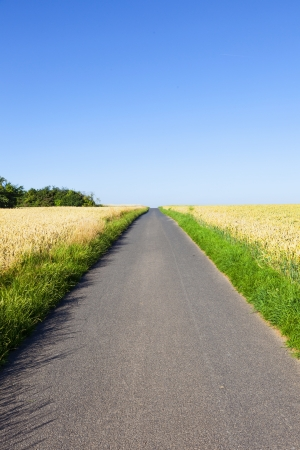 bicycle lane through corn fields under blue sky photo