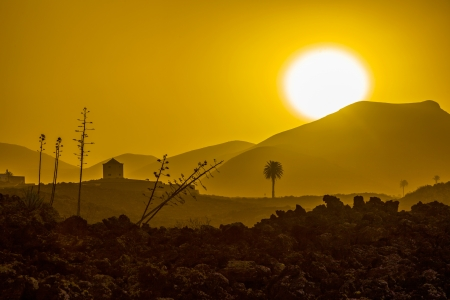 romantic sunset with standalone trees in the volcanic area in Lanzarote photo
