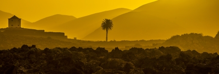 romantic sunset with standalone trees in the volcanic area in Lanzarote Stock Photo - 17150613