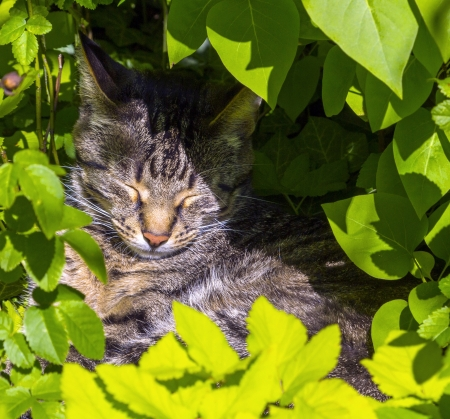 cute cat lying in the hedge and relaxes Stock Photo - 17150750