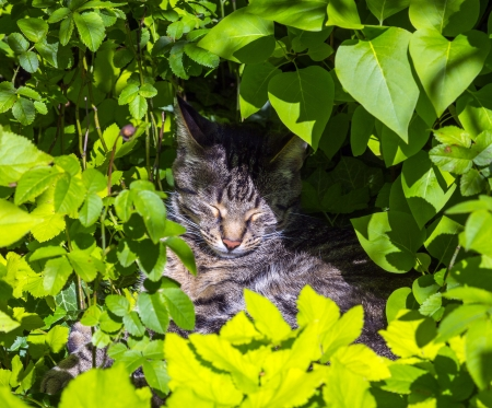 cute cat lying in the hedge and relaxes Stock Photo - 17150830