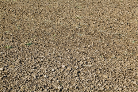 taxonomy: freshly ploughed field in spring before the sead
