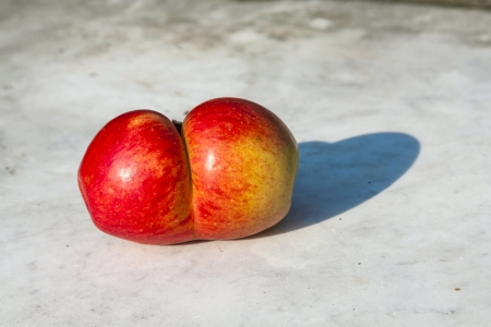 mutations: fresh apples with funny deformations like double egg Stock Photo
