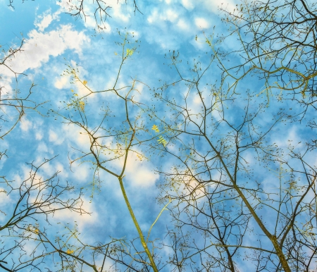 pattern of branches of plane tree with blue sky photo
