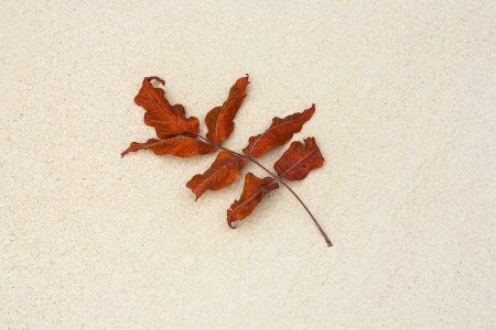 beautiful structured leaves at the beach arranged by nature in a harmonic way Stock Photo - 17848966
