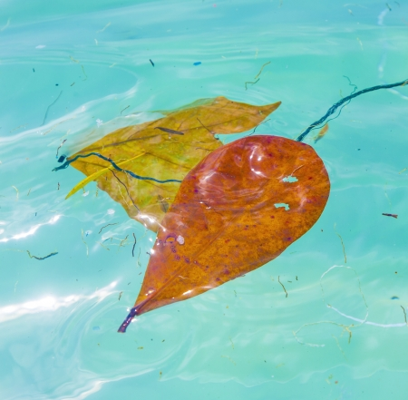 leaves are swimming in the water and give a wonderful harmonic structure Stock Photo - 17849018