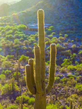 sunset with beautiful green cacti in desert landscape photo