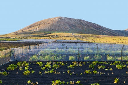 timanfaya: water irrigation system on a field with a volcano in the background Stock Photo