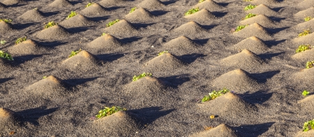 hydrophobic: pattern of field with vegetables growing on volcanic earth Stock Photo