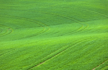 marks in the green field photo