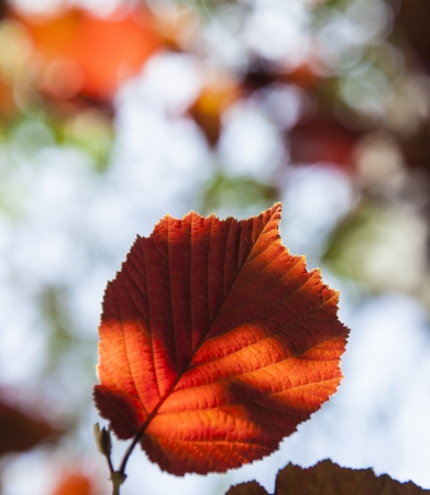 earth nut: detail of leaves in the forest with indian summer colors