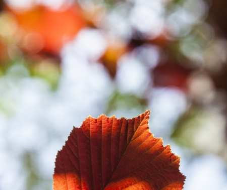 detail of leaves in the forest with indian summer colors photo