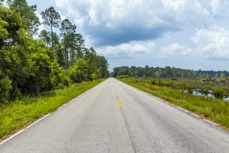 street through the florida swamp on a warm summer day Stock Photo - 21598165
