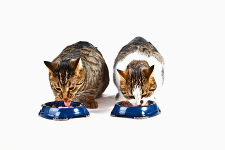 two hungry cats have their meal photo