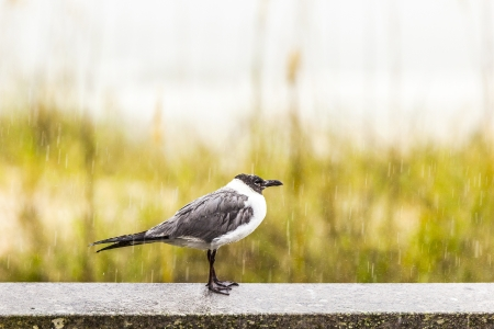 bird in rainshower at the beach photo