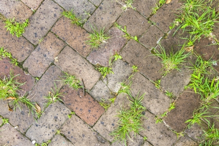 old tiles at the sidewalk with plants in the joints Stock Photo - 21989594