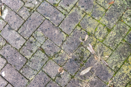 old tiles at the sidewalk with plants in the joints photo