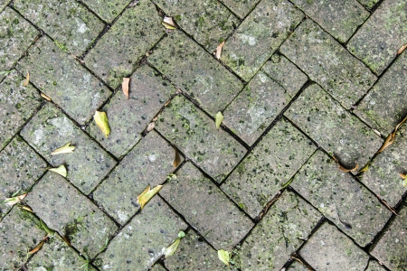 old tiles at the sidewalk with plants in the joints Stock Photo - 21989756