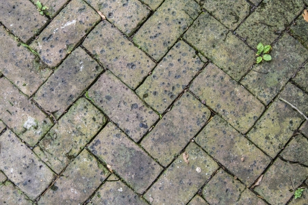 old tiles at the sidewalk with plants in the joints Stock Photo - 21989806