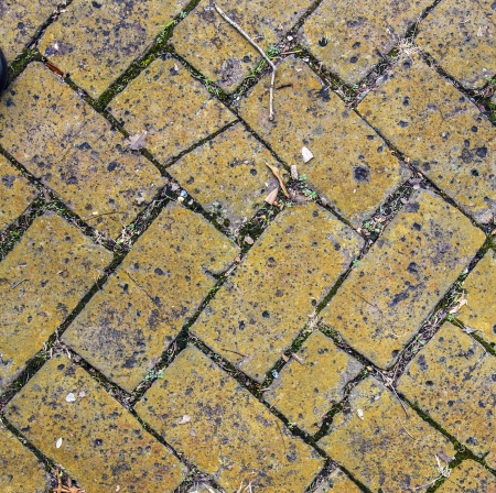 old tiles at the sidewalk with plants in the joints Stock Photo - 21989826