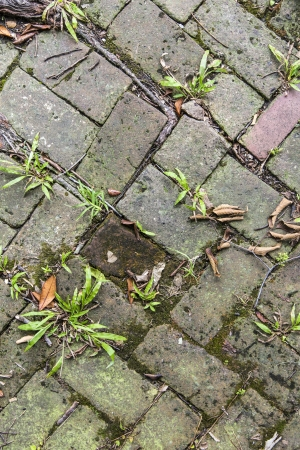 old tiles at the sidewalk with plants in the joints Stock Photo - 21989865