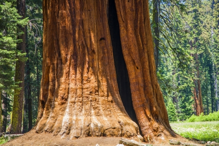 Sequoia national Park with old huge Sequoia trees like redwoods in beautiful landscape Stock Photo - 22118550