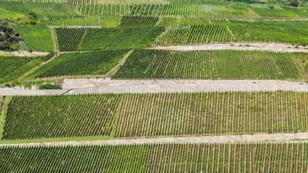 rudesheim: beautiful vineyards at  the rhine valley