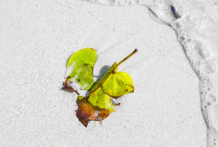 beautiful structured leaves at the beach arranged by nature in a harmonic way Stock Photo - 22542507