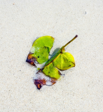 harmonic: beautiful structured leaves at the beach arranged by nature in a harmonic way
