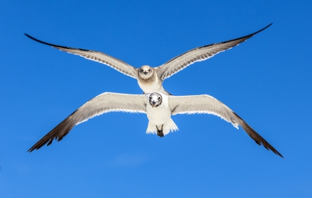 seagull on blue sky background  at the ocean photo