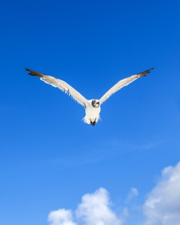 seagull on blue sky background  at the ocean Stock Photo