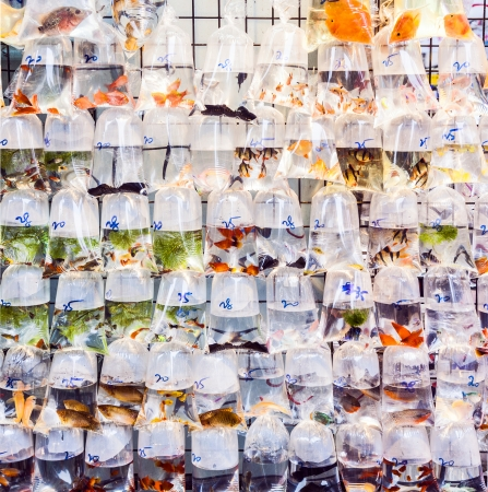 plastic bags of fishes for sale at the market Stock Photo