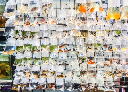 plastic bags of fishes for sale at the market Stock Photo - 23680601