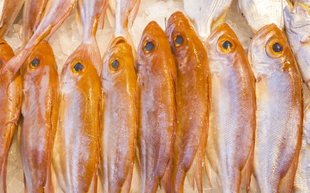 whole fresh fishes are offered in the fish market in asia photo