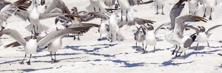 flock of seagulls at the sandy beach photo