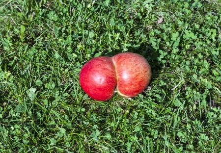 mutations: fresh apples with  gene mutations Stock Photo