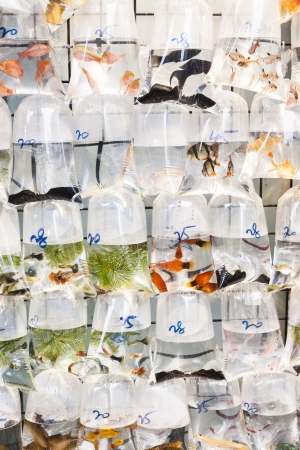 Bags of fishes for sale at a market Stock Photo - 25372979