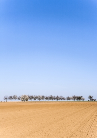 freshly ploughed acre with row of trees at the horizon photo