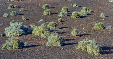 timanfaya: vegetaci�n en la zona volc�nica de Lanzarote, Parque Nacional de Timanfaya Foto de archivo