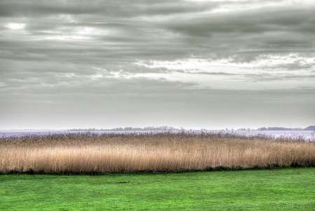 reprimanding: reed landscape in Usedom in bright colors Stock Photo