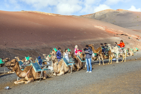 saddle camel: TIMANFAYA NATIONAL PARK, LANZAROTE, SPAIN - DECEMBER 26, 2010: Tourists riding on camels being guided by local people through the famous Timanfaya National Park in Lanzarote, Spain