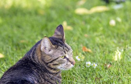 closed eyes: Kat ligt op het gras met gesloten ogen