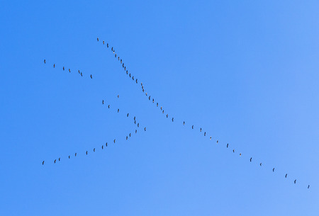 aerea: migrant birds on their way to warmer aerea under blue sky