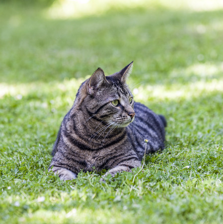 cute cat relaxes in the garden photo
