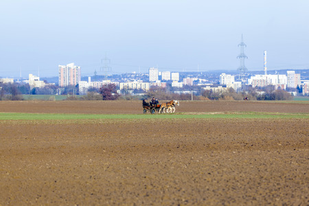 STIERSTADT, GERMANY - MARCH 2, 2013: coachman with horse coach rides in the fields in Sulzbach, Germany. In the background the skyline of Frankfurt in evening light. Kocs was the Hungarian post town in the 15th century onwards, which gave its name to a fa