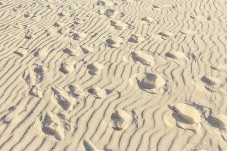 vogelspuren: Vogel-Spuren auf dem Sand