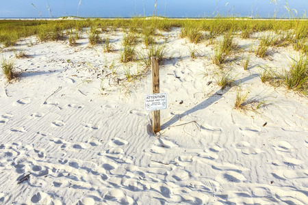 reported: DAUPHINE ISLAND, USA - JULY 18, 2013: protected area for shorebird nesting at the beach in Dauphine Island, USA. An incredible 347 species have been reported on the island.