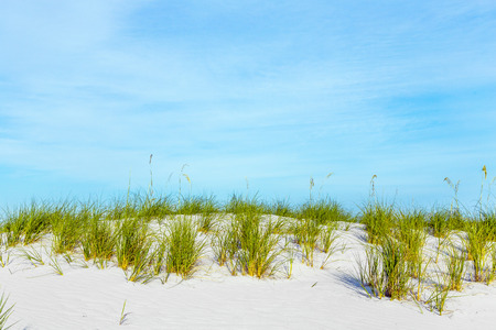 nostalgy: grass grows at dune at a beautiful beach on Dauphine Island