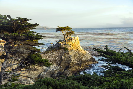 lobos: PEPPLE BEACH, USA - JULY 26, 2008: lonely cypress in sunset  in Pebble Beach, USA. Since 250 years this lonely cypress stands on the hill and is nowadays the symbol of the Pebble Beach Company. Editorial