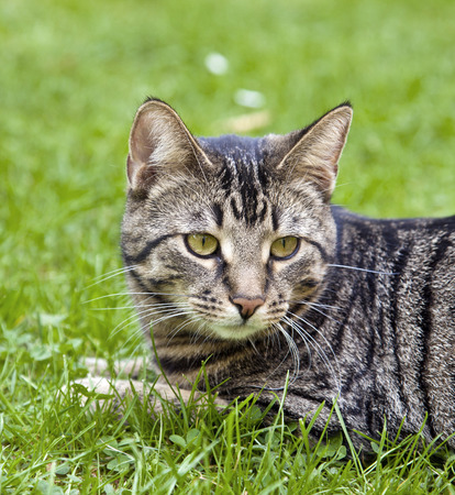 cute cat lying in the grass of the garden photo